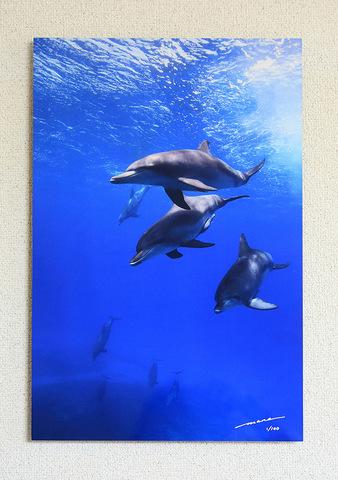 The Bonin Dolphins #005