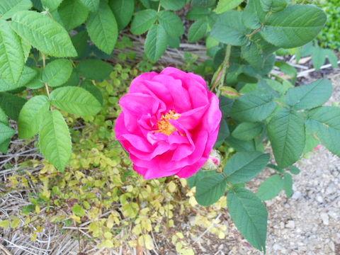 cuillereオリジナル♪Pure,naturelle et 「Rose herbe boutique」