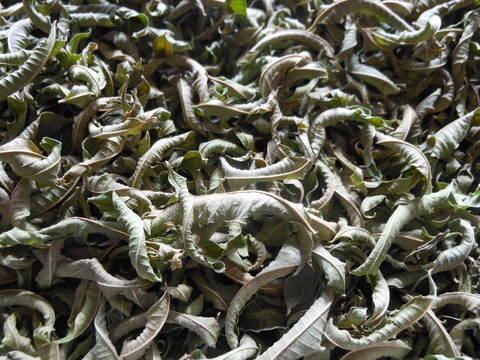 cuillere Pure, naturelle et ~La Verveine~ 自家製自然栽培レモンバーベナ 無農薬無肥料無堆肥栽培