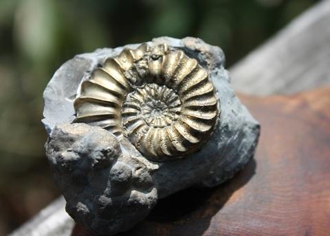 超激レア! アンモナイトパイライト2個付(化石)