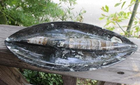 激レア1点もの! 古代の海を切り取った皿 巨大オルソセラス&アンモナイト他大理石皿&