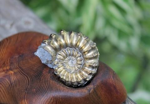 黄金の輝き! 超激レア美品 パイライトアンモナイト化石