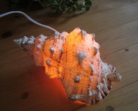 セール特価! 貝殻 大型ランプC