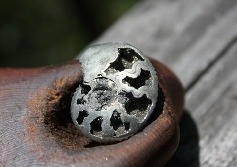 セール特価! 激レア1点もの パイライトアンモナイト化石 単体