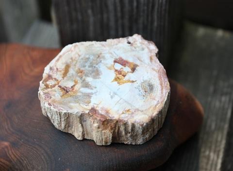 ペトリファイドウッド(珪化木)化石磨き