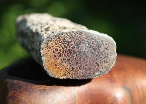 古代への誘い! 瑪瑙化ダイナソーボーン(恐竜化石)原石