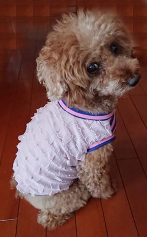 ピンクフリルTシャツ