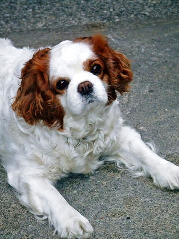犬・猫用総合栄養食品・カプセル(免研ペット糖鎖食品)(417mg×10cap)×5シート×2ケース 健康楽々くん