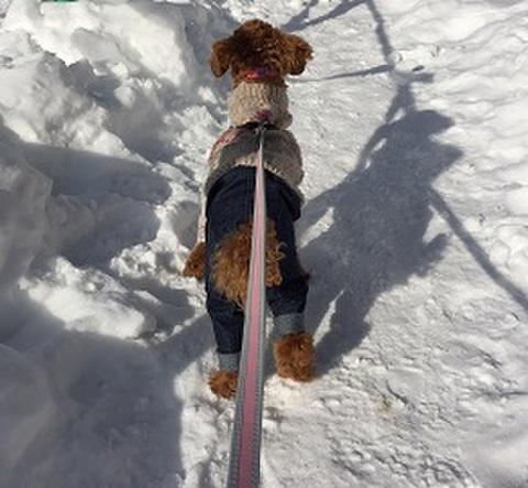 犬服型紙 デニムパンツ dog-4