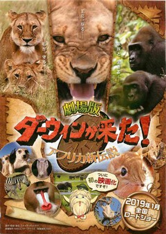 映画チラシ: ダーウィンが来た! アフリカ新伝説(片面)