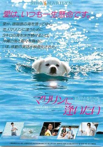 映画チラシ: マリリンに逢いたい(題字右下)