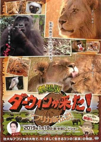映画チラシ: ダーウィンが来た! アフリカ新伝説