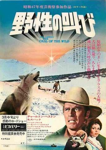 映画チラシ: 野生の叫び
