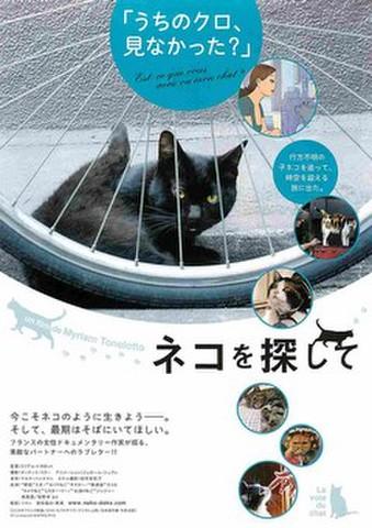 映画チラシ: ネコを探して