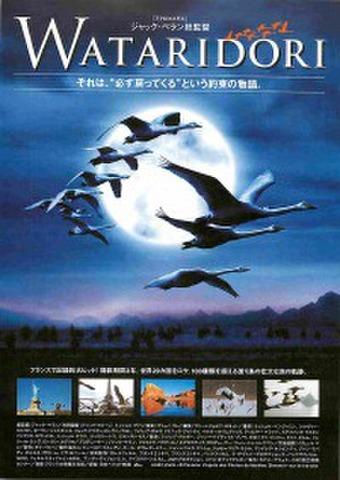 映画チラシ: WATARIDORI