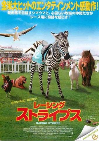 映画チラシ: レーシング・ストライプス(全米大ヒットの~)