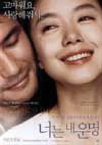 韓国チラシ261: 君は僕の運命