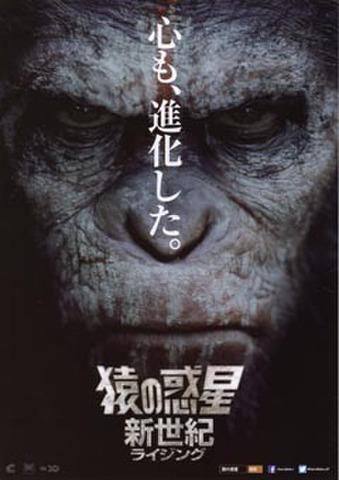 映画チラシ: 猿の惑星:新世紀(心も~)