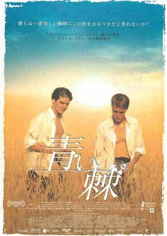 映画チラシ: 青い棘(邦題白)
