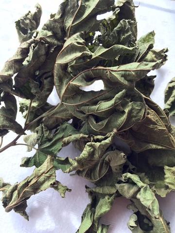 乾燥桑の葉っぱ 5g