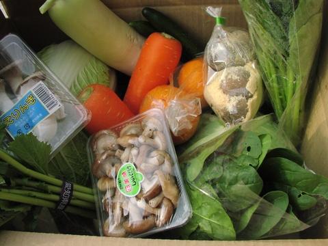 げんきの郷の新鮮野菜ボックス(自宅用4200円セット:税込・クール送料込)