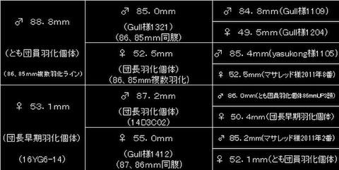 種親88.8mm!能勢YG88.8×53.1mm 初2令幼虫