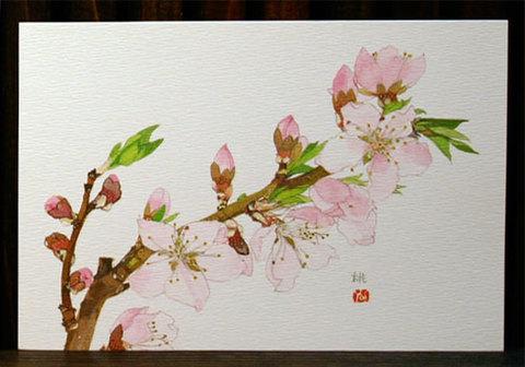 バラはがき(早春)「桃」
