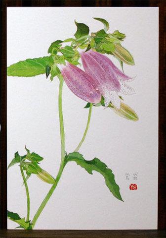 絵はがき(夏)「蛍袋(紫)」
