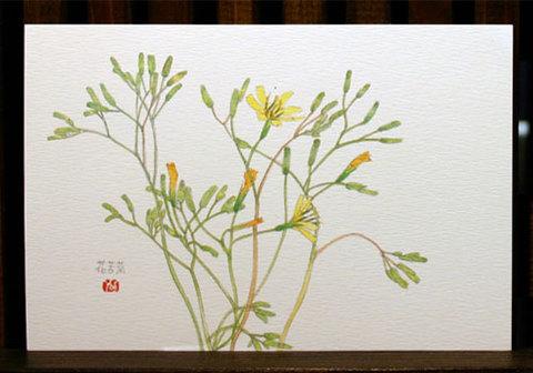 絵はがき(初夏)「花苦菜」
