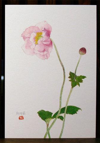 バラはがき(秋)「秋明菊」
