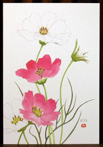 バラはがき(秋)「秋桜」