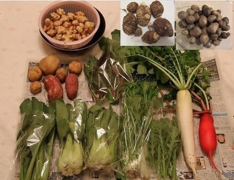 いろいろ冬野菜セット