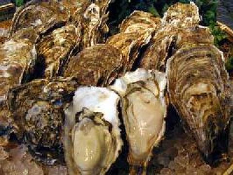 ★保証付★厚岸産活かき貝10個セット