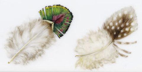 絵付テキストNo7【鳥の羽の描き方】