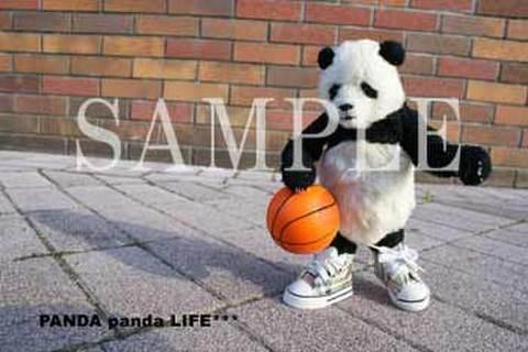 ストリートバスケ