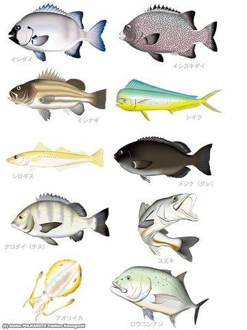 アングラーセット 魚イラスト画像10点セット jpg形式 300dpi (RGB)