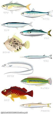 「スーパーの魚」セット イラスト画像 魚イラスト画像10点セット jpg形式 (RGB)