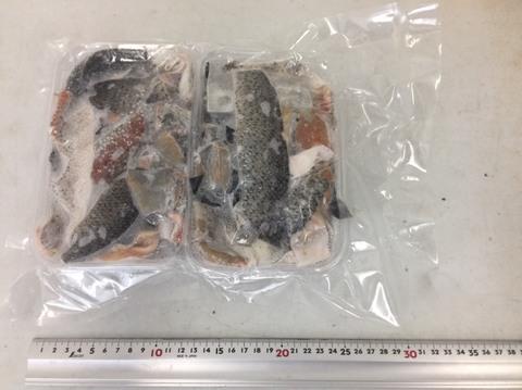 (442)鮭皮(さけっぴ) 茹でポン酢用