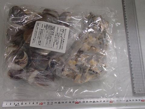 (888)海のエスカルゴ 身+貝殻セット