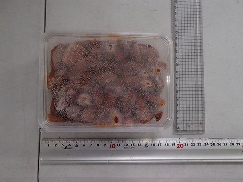 (450)海鮮 チャンジャ