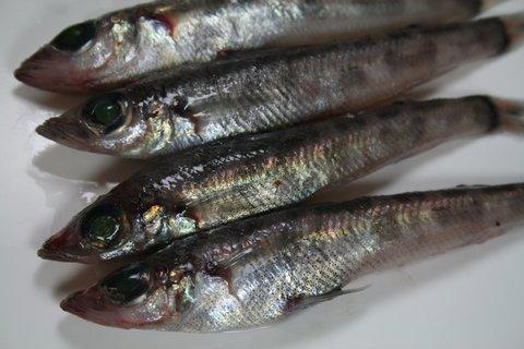 (242)鮮魚:メヒカリ