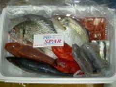 (240)おまかせ「はやり取り用」小魚BOX 中箱
