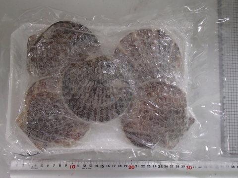 (951)ホタテ貝 両殻残し生冷凍 大