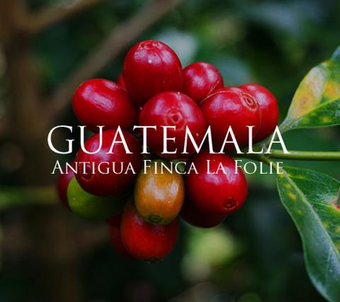 グァテマラ アンティグア ラフォリー 200g