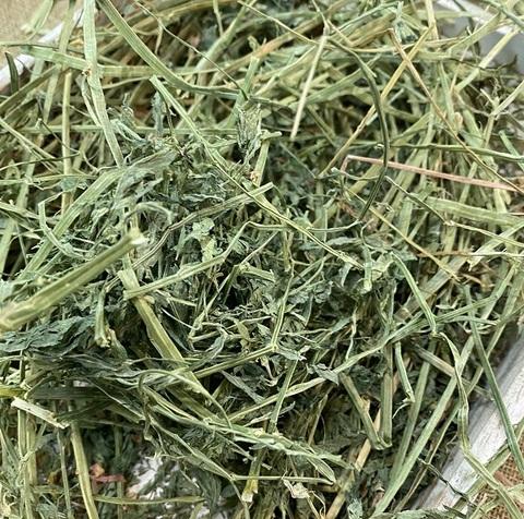 アルファルファ300g COTTON GRASS