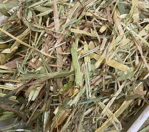 オーツヘイ300g COTTON GRASS