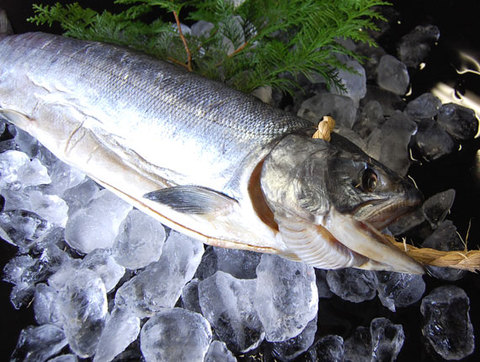 鮭の山漬け 極上品 雌1尾2kg前後