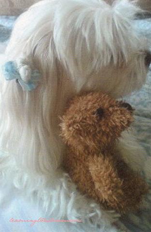 """ANGELINA'S POSTCARD """"Teddy Bear"""""""