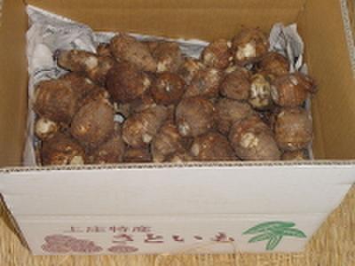 [00300] 上庄の里芋【3kg】土付き【11月よりご予約順に発送】