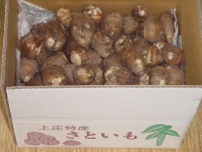 [00301] 上庄の里芋【5kg】土付き【11月よりご予約順に発送】